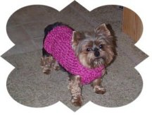 free Knitting Patterns For Chihuahuas
