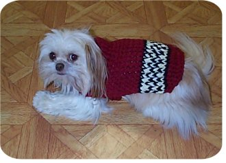My knit and crochet dog sweater patterns