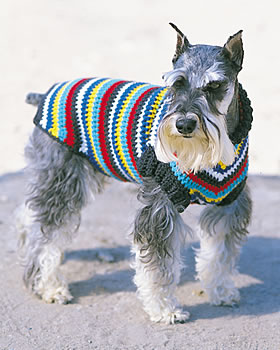"Rib Knit Dog Sweater Pattern 14"" Boston Terrier"